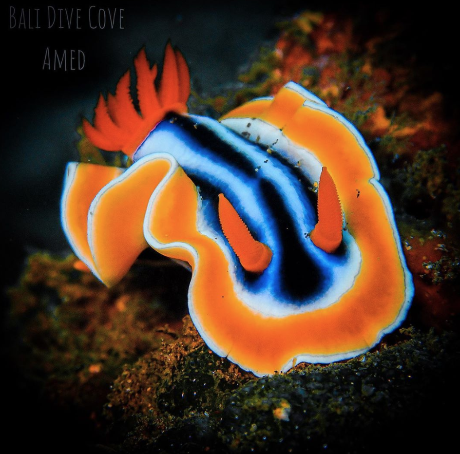 coral reef creature blue and orange fish